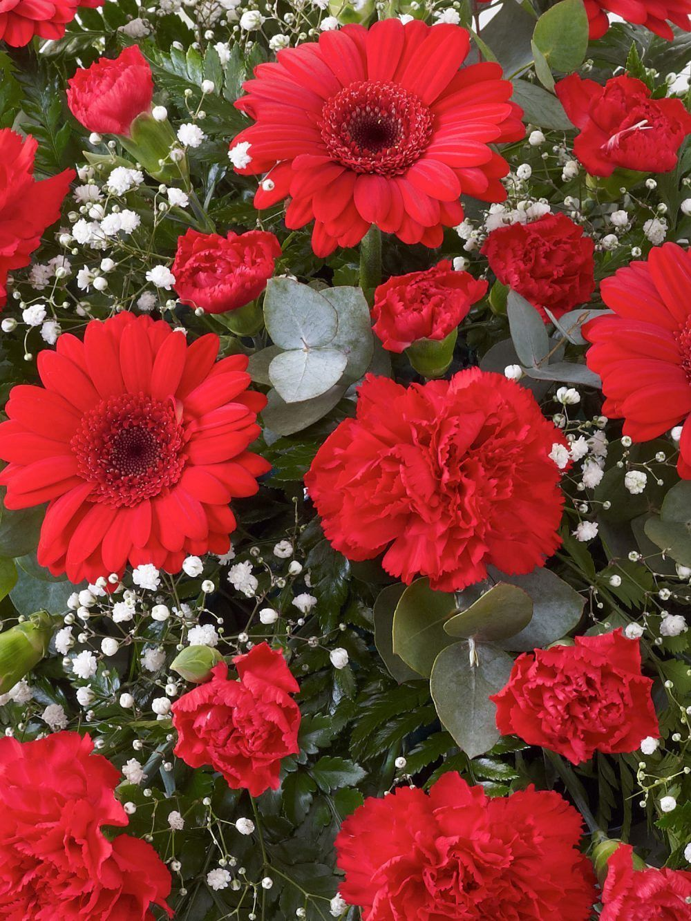 Carnation And Germini Teardrop Spray Red