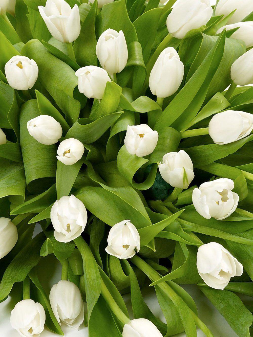 Tulip Posy 1